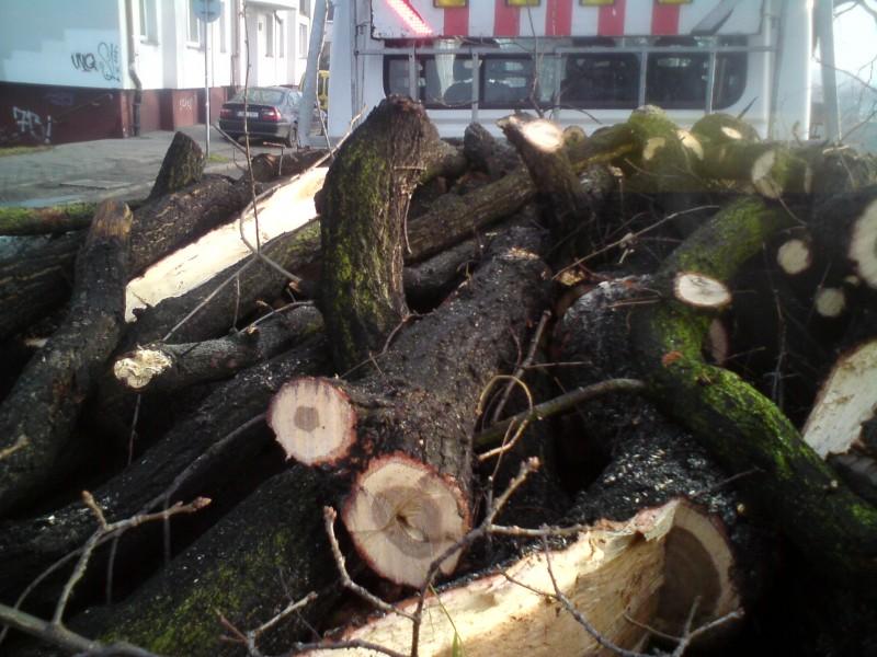 Drewno z pielęgnacji drzew przy ul. Na Polance
